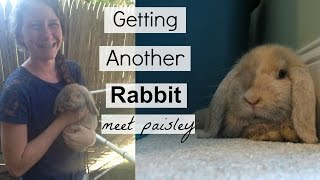 Getting Another Rabbit| Fins and Paws