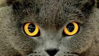 Что будет если удалить кошкам или котам когти?