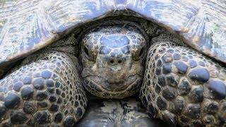 Черепаха средиземноморская и грязевые вулканы