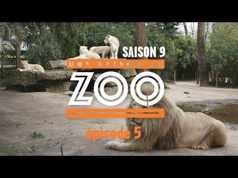 Une Saison au Zoo S9 - Ep05