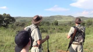 Lion stalking us on first walking safari (don
