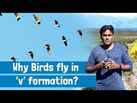Why birds fly in V shape? |Tamil | LMES #66