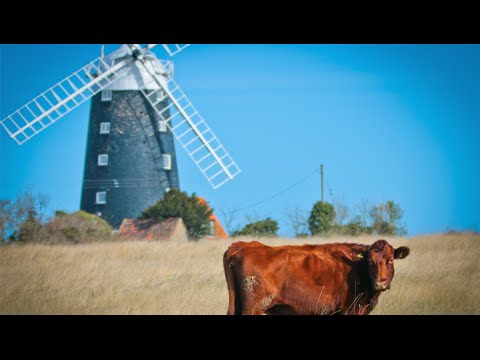 Visual Norfolk Video - The Windmill and The Cows