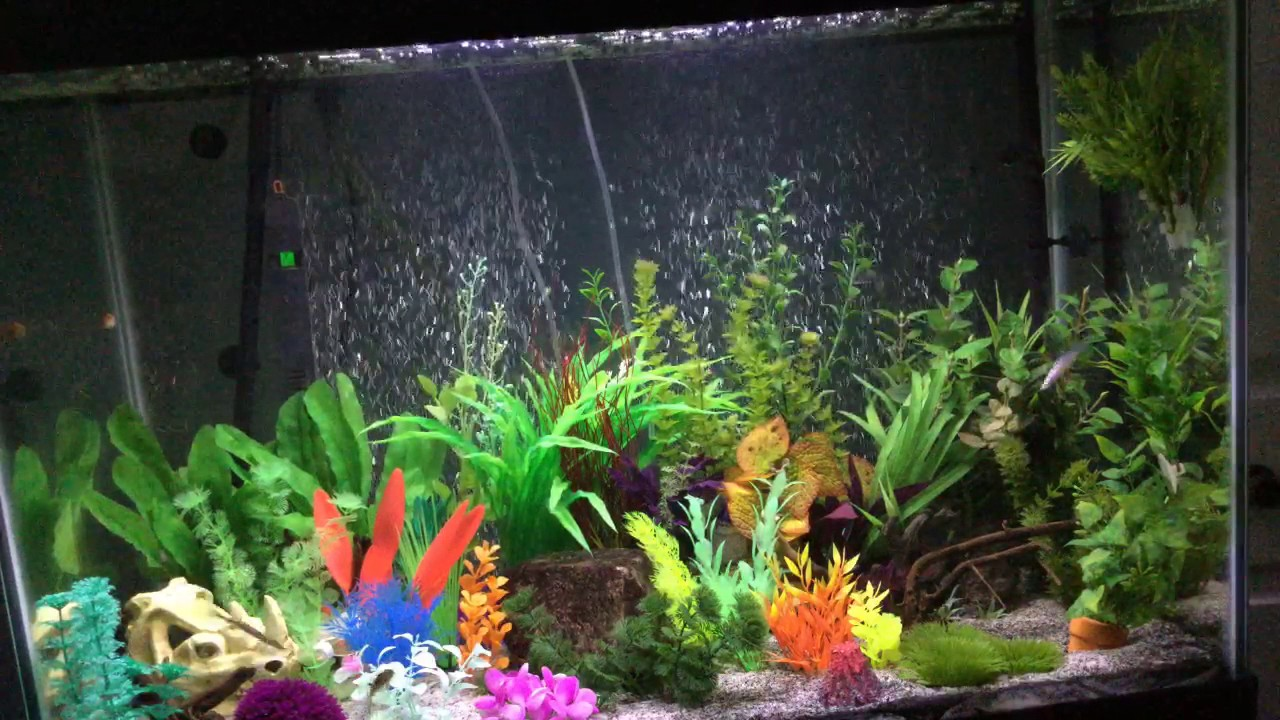 65 gallon fish tank livestream youtube for 65 gallon fish tank