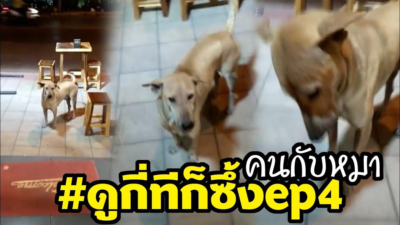 หมาจรมาขอข้าวร้านกิน เกือบไม่ทันปิดร้าน น่าเอ็นดูมาก #ดูกี่ทีก็ซึ้ง ep4