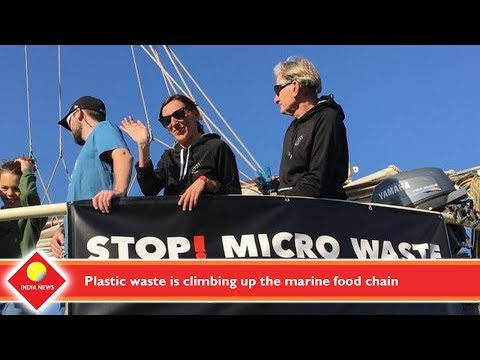 Plastic waste is climbing up the marine food chain