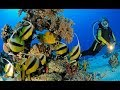 SCUBA Diving Egypt Red Sea - Underwater video