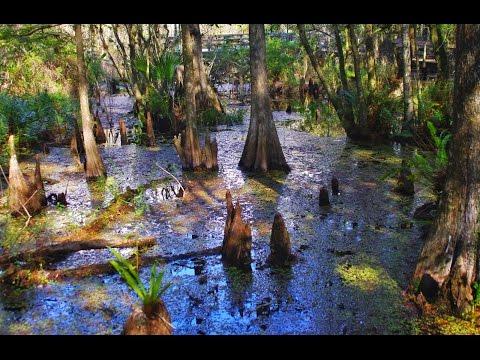6 Mile Cypress Slough Park Tour - Ft. Myers Florida