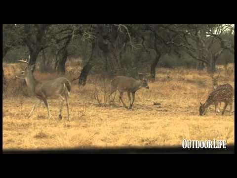 Record Quest: Hunting Trophy Whitetails At Ford Ranch Texas