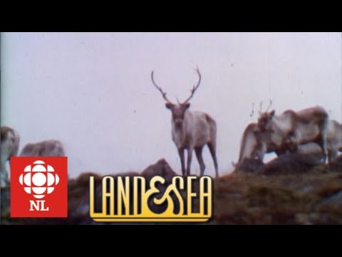 Land & Sea: Big Game Hunting In Newfoundland