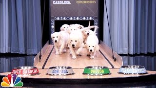Puppies Predict the 2017 Final Four Championship
