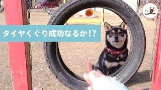 おやつがタイヤの向こうで待ってる!よーし✨ 【PECO TV】 thumbnail