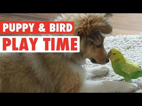 A Puppy And Bird Friendship