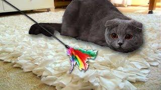 КОТЕНОК Буся играет с игрушками kitten academy the cat
