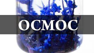 Осмос. Химический сад. Химия –просто