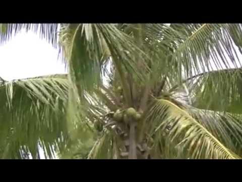 Spotlight On: Tonga