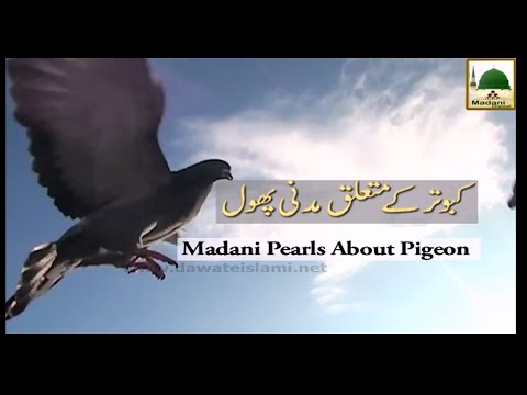 Kabootar Ke Mutaliq Madani Phool - Maulana Ilyas Qadri - Short Speech