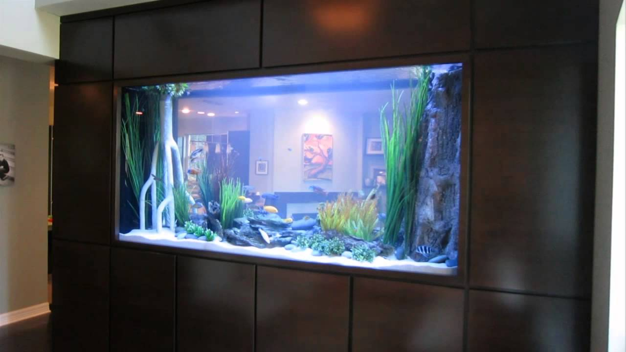 Freshwater aquarium fish houston -  Fish Gallery Houston