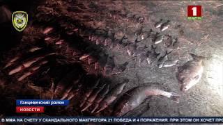 Браконьєрів, які використовували мережі, затримали в районі Ганцевичском