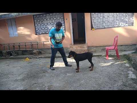 bark and down dog training