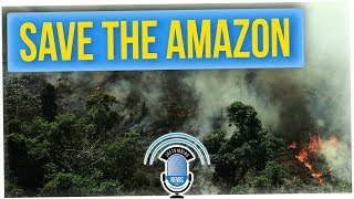 The Amazon Rainforest is on FIRE!?