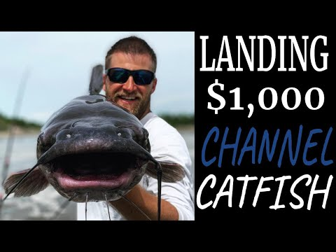 Manitoba Master Angler Catfish On The Red River (feat. Darren's Northern Life)