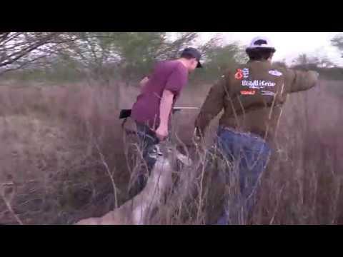 Cull Deer Hunting In Texas