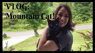 VLOG! Mountain Walking with a Cat!
