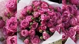 Букет Пионовидных Кустовых Роз Мисти Баблз