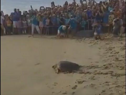 Sea Turtle Release 7/8/16