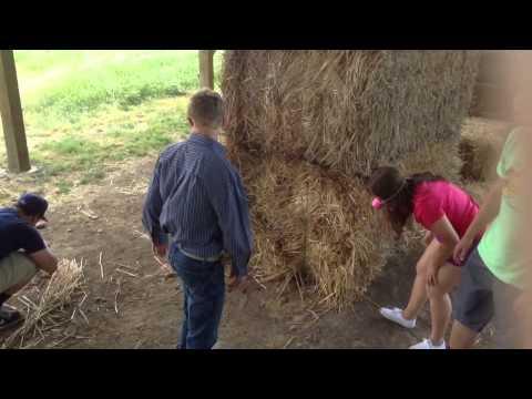 Animal Farm Movie - YouTube