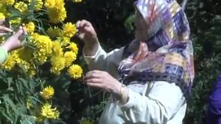 Annem Hakkını Helal Eyle - Mustafa Aslantürk