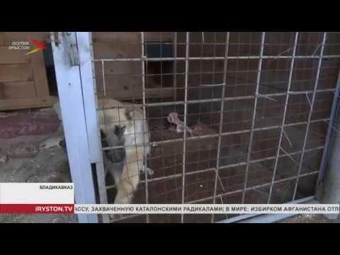 В России с 1 января 2020 запретят выгул опасных собак без намордника и поводка