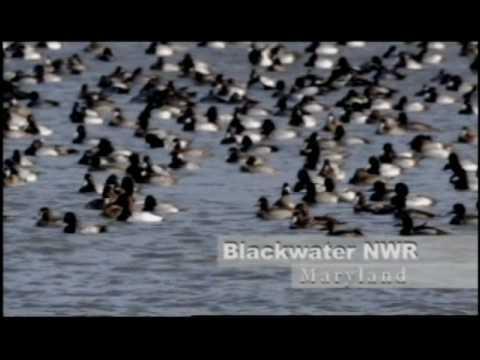 Blackwater National Wildlife Refuge - Go Wild!