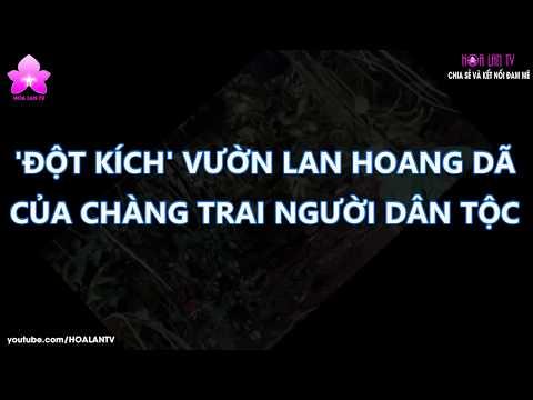 """HoalanTV: Lạc Vào Vườn Lan """"Khủng"""" Đầy Hoang Dã Của Chàng Trai Ở Lâm Đồng"""