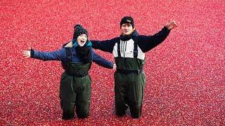 Baden in 1 Million Cranberries