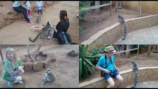 Манки Парк на Тенерифе. Удивительные животные! Monkey Park - amazing animals.