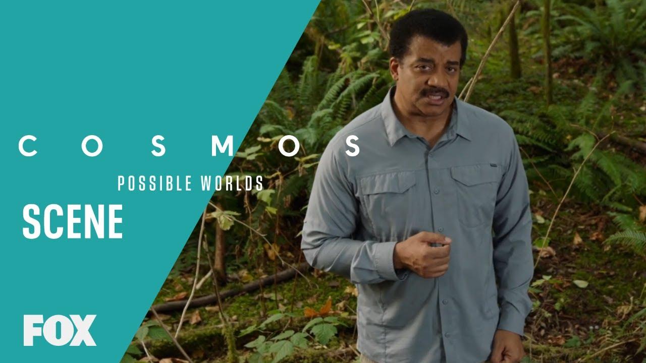 Download Alien Intelligence Vs. Earthly Intelligence   Season 1 Ep. 7   COSMOS: POSSIBLE WORLDS
