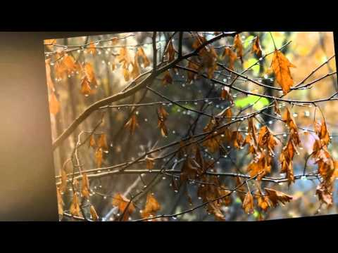 Осени очарованье