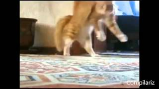 The Best Dancing Cats Ever Compilation   Funny Daning Cats Compilation Youtube 2014