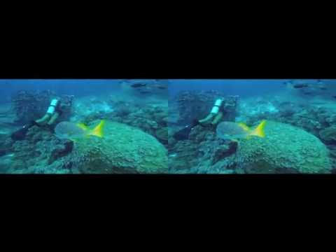 Scuba Diving the Galapagos Islands in 3D - For Google Cardboard - 3D side by side (3DS)