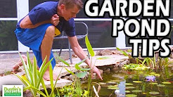 Garden Pond Tips,  Water Pond Plants