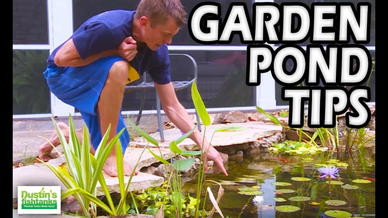 Garden Pond Tips Water Pond Plants Youtube