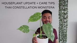 HOUSEPLANT UPDATE | Thai Constellation Monstera | RARE HOUSEPLANT