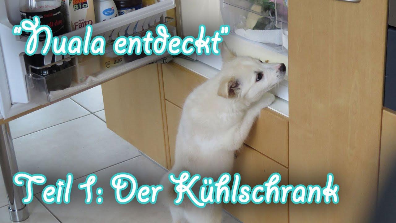 Kühlschrank Husky : Finden sie hohe qualität husky kühlschrank hersteller und husky