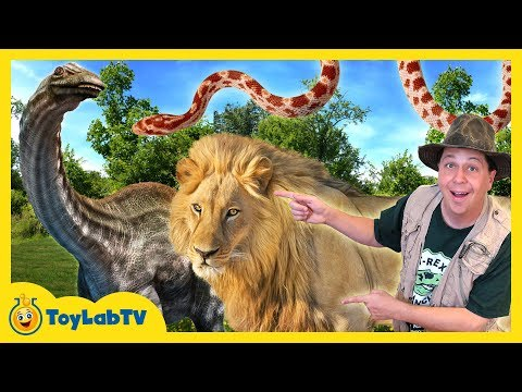 Thumbnail: DINOSAUR CAPTURED! Animal Adventure Park Family Fun Zoo Trip, Children's Outdoor Activities for Kids
