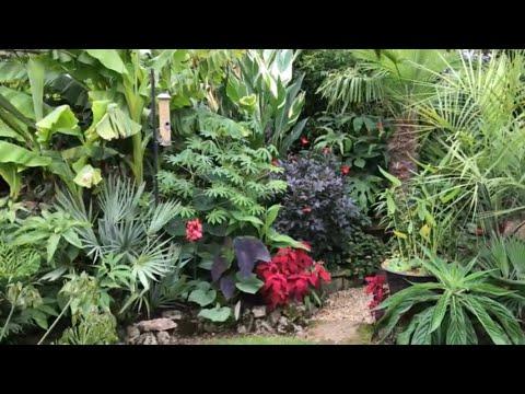 Springy's (Steve) Windswept Exotic/tropical Garden In Abingdon On Thames, UK.