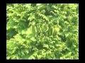 Chakra 4 green 639 Hz - Heart Chakra Chakra Balancing Music
