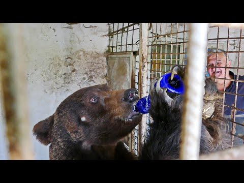 Eminovi medvjedi najviše vole piti jogurt, znaju i čep odvrnuti, ne bi ih prodao ni po koju cijenu
