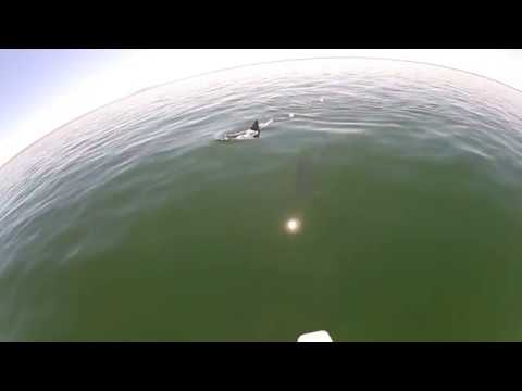 DOLPHINS OF PORT WAKEFIELD